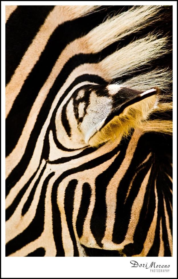 Zebra Patterns