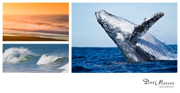 Port St Johns and the magical breaching humpback whales
