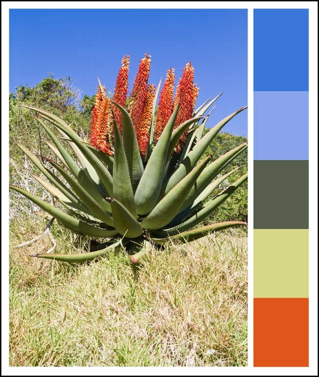 Drakensberg, aloe, South Africa, Dori Moreno, photograph